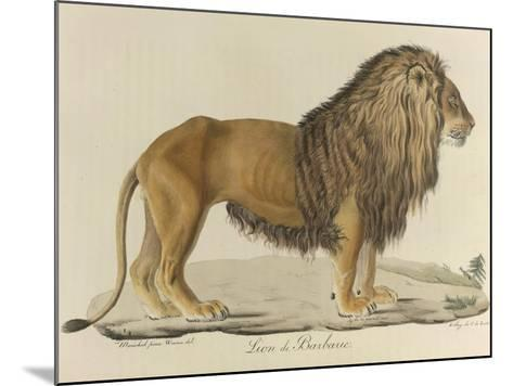 a Barbary Lion--Mounted Giclee Print