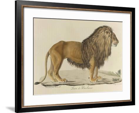 a Barbary Lion--Framed Art Print