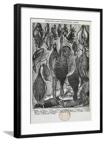 Poultry and Feathered Game-Isabella Beeton-Framed Art Print