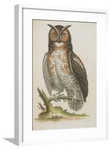 Owl--Framed Art Print