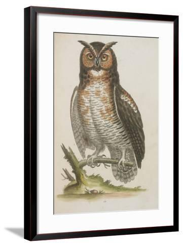 Owl--Framed Art Print