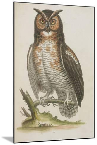 Owl--Mounted Giclee Print