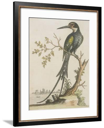 Kingfisher--Framed Art Print