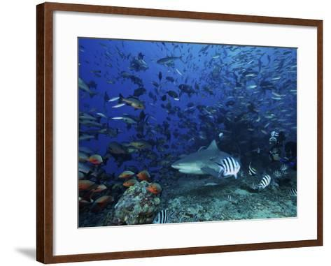 An Underwater Photographer Films a Large Bull Shark Surrounded by Hundreds of Reef Fish, Fiji-Stocktrek Images-Framed Art Print