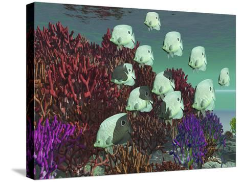 A School of Butterflyfish Swim Over Colorful Coral-Stocktrek Images-Stretched Canvas Print