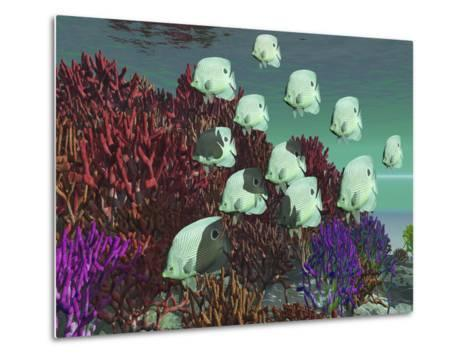 A School of Butterflyfish Swim Over Colorful Coral-Stocktrek Images-Metal Print