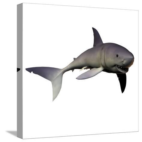 Mako Shark-Stocktrek Images-Stretched Canvas Print