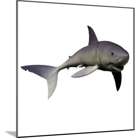 Mako Shark-Stocktrek Images-Mounted Photographic Print