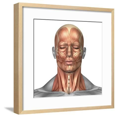 Anatomy of Human Face And Neck Muscles, Front View-Stocktrek Images-Framed Art Print