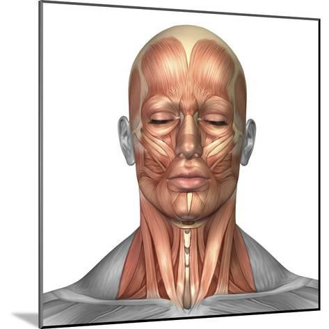 Anatomy of Human Face And Neck Muscles, Front View-Stocktrek Images-Mounted Photographic Print
