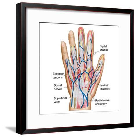 Anatomy of Back of Human Hand-Stocktrek Images-Framed Art Print