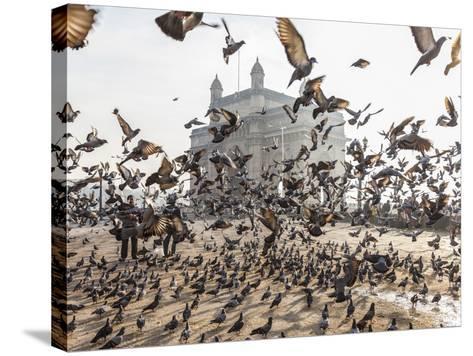 Pigeons, India Gate, Colaba, Mumbai (Bombay), India-Peter Adams-Stretched Canvas Print