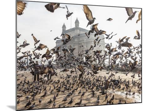 Pigeons, India Gate, Colaba, Mumbai (Bombay), India-Peter Adams-Mounted Photographic Print