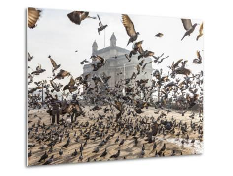 Pigeons, India Gate, Colaba, Mumbai (Bombay), India-Peter Adams-Metal Print