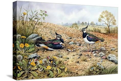 Lapwing Family with Goldfinches-Carl Donner-Stretched Canvas Print