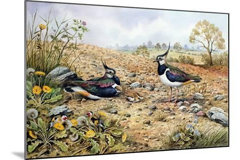 Lapwing Family with Goldfinches-Carl Donner-Mounted Giclee Print