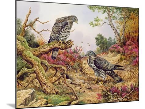 Honey Buzzards-Carl Donner-Mounted Giclee Print