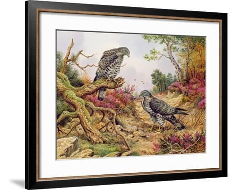 Honey Buzzards-Carl Donner-Framed Art Print