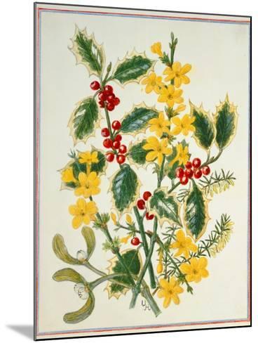 Holly, Winter Jasmine, Heath and Mistletoe-Ursula Hodgson-Mounted Giclee Print