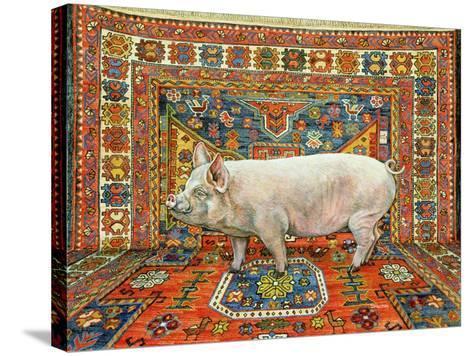 Singleton Carpet Pig-Ditz-Stretched Canvas Print