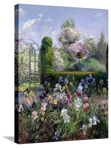 Irises in the Formal Gardens, 1993-Timothy Easton-Stretched Canvas Print