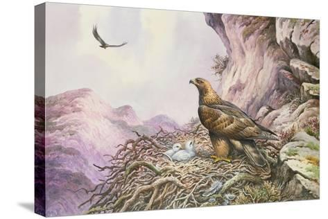 Golden Eagles at their Eyrie-Carl Donner-Stretched Canvas Print