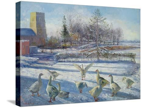 Snow Geese, Winter Morning-Timothy Easton-Stretched Canvas Print