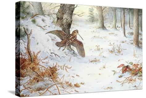 Snipe in Wooded Landscape-Carl Donner-Stretched Canvas Print