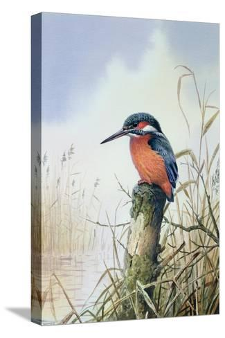 Kingfisher-Carl Donner-Stretched Canvas Print