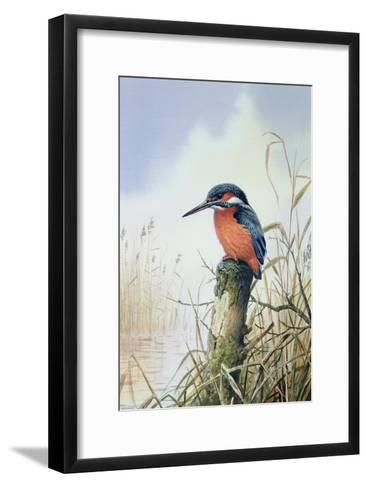 Kingfisher-Carl Donner-Framed Art Print