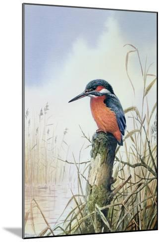 Kingfisher-Carl Donner-Mounted Giclee Print