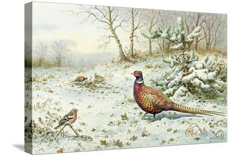 Cock Pheasant and Chaffinch-Carl Donner-Stretched Canvas Print
