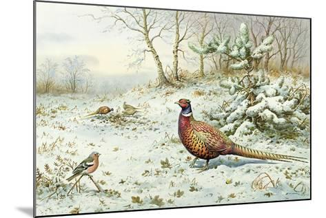 Cock Pheasant and Chaffinch-Carl Donner-Mounted Giclee Print