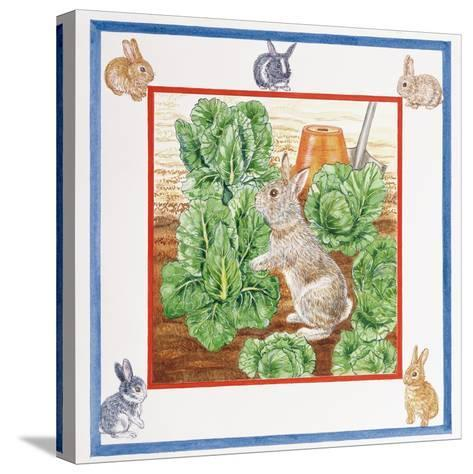 A Rabbit in the Cabbage Patch-Catherine Bradbury-Stretched Canvas Print