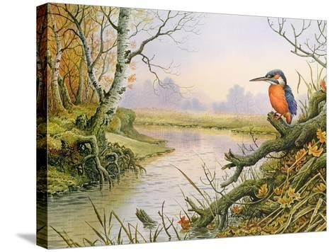 Kingfisher: Autumn River Scene-Carl Donner-Stretched Canvas Print