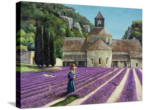 Lavender Picker, Abbaye Senanque, Provence-Trevor Neal-Stretched Canvas Print