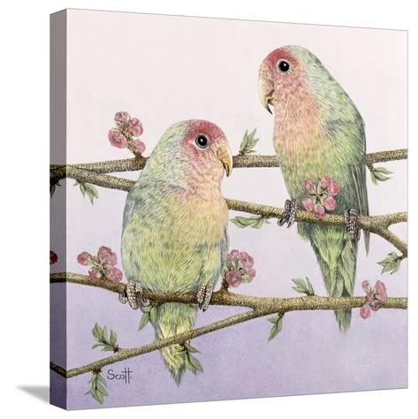 Love Birds-Pat Scott-Stretched Canvas Print