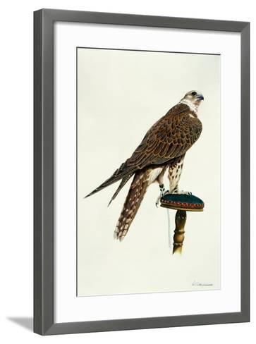Portrait of a Female Saker Falcon, 1988-Mary Clare Critchley-Salmonson-Framed Art Print