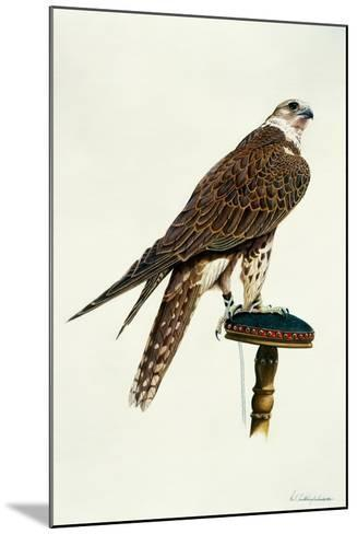 Portrait of a Female Saker Falcon, 1988-Mary Clare Critchley-Salmonson-Mounted Giclee Print