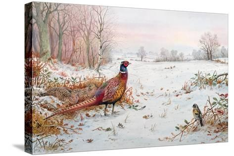 Pheasant and Bramblefinch in the Snow-Carl Donner-Stretched Canvas Print