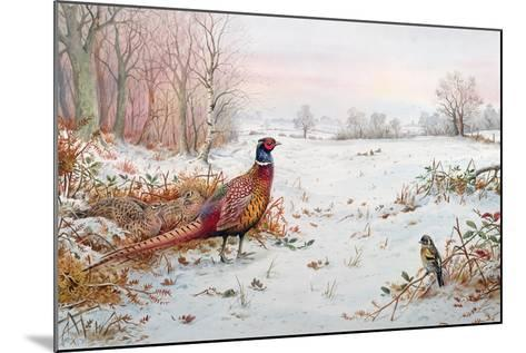 Pheasant and Bramblefinch in the Snow-Carl Donner-Mounted Giclee Print
