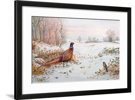 Pheasant and Bramblefinch in the Snow-Carl Donner-Framed Art Print