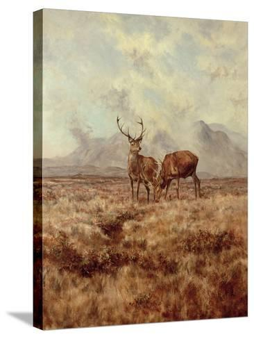 Red Stags, Ben Buie, 1982-Tim Scott Bolton-Stretched Canvas Print