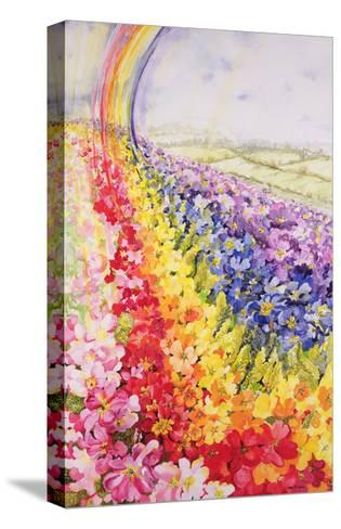 Primrose Rainbow-Joan Thewsey-Stretched Canvas Print