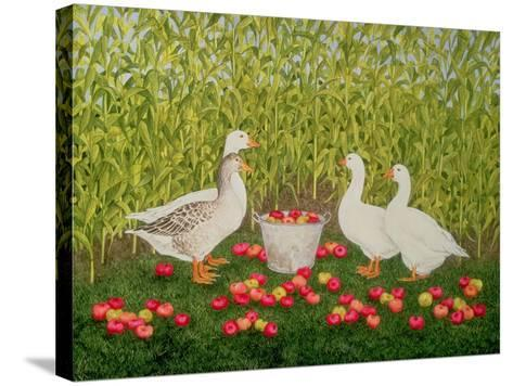 Sweetcorn-Geese-Ditz-Stretched Canvas Print