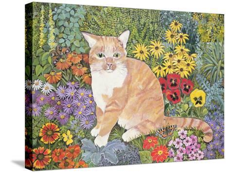The Carpenter's Cat-Hilary Jones-Stretched Canvas Print