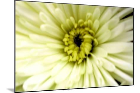 Birthday Flower-Sarah O'Toole-Mounted Photographic Print