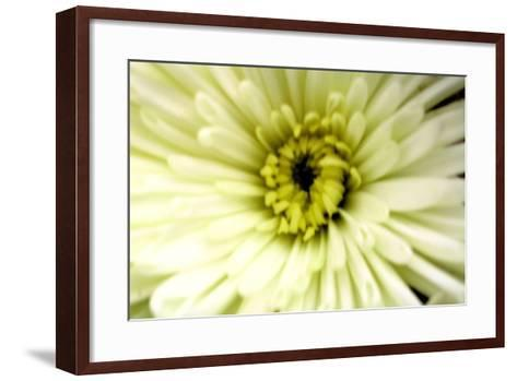 Birthday Flower-Sarah O'Toole-Framed Art Print