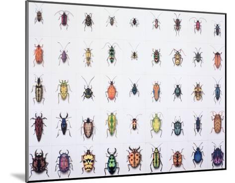Beetles, 1999-Charlie Baird-Mounted Giclee Print
