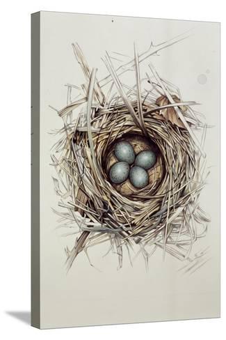 Turdus Merula (Blackbird), 1999-Sandra Lawrence-Stretched Canvas Print